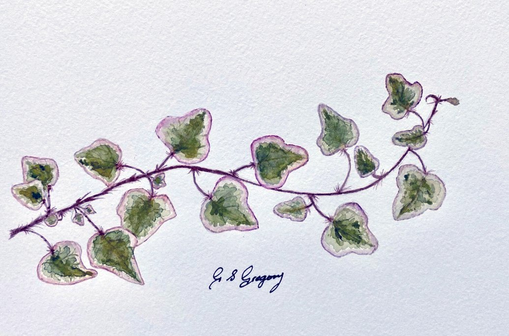 gregory-ivy-leaves-watercolour
