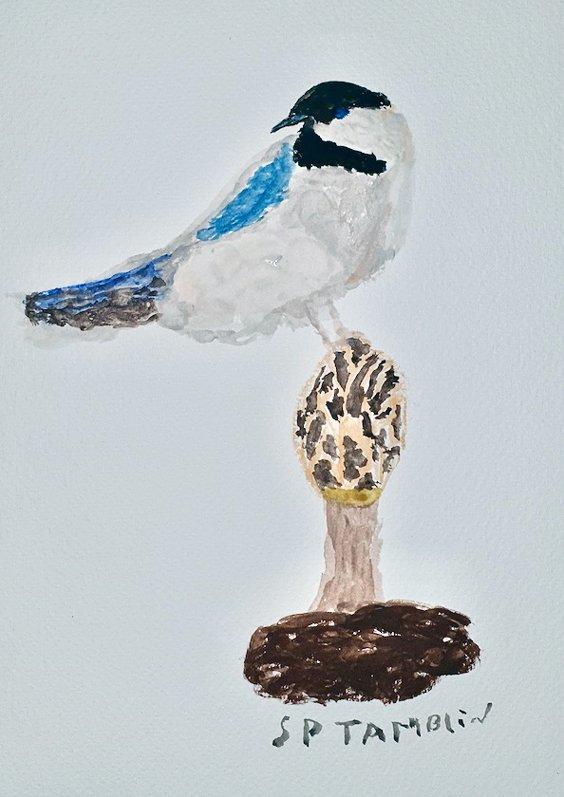 tamblin-bird